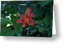 Tiger Lily In June 2018 Greeting Card