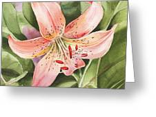 Tiger Lily Watercolor By Irina Sztukowski Greeting Card