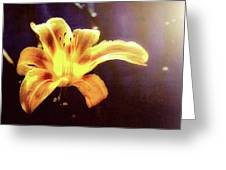 Tiger Lily On Waters Edge Greeting Card