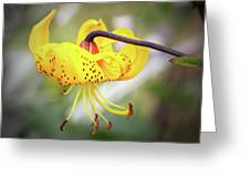 Tiger Lily. Greeting Card