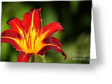Tiger Lily0078 Greeting Card