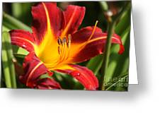 Tiger Lily0170 Greeting Card