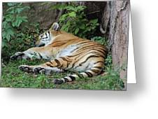 Tiger- Lincoln Park Zoo Greeting Card