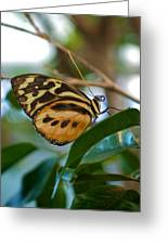Tiger Longwing Butterfly I Greeting Card