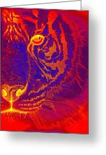 Tiger On Fire Greeting Card