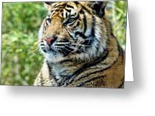 Tiger On Guard Greeting Card