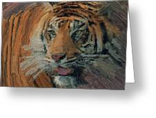 Tiger On Hunting Greeting Card
