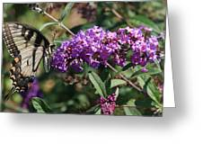 Tiger On Lavender Greeting Card