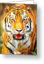Tiger On The Hunt Greeting Card
