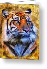 Tiger Portrait Greeting Card by Jai Johnson