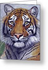 Tiger Portrayal Greeting Card