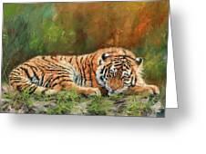 Tiger Repose Greeting Card