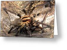 Tiger Spider  Greeting Card