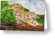 Tiger Stretching Greeting Card