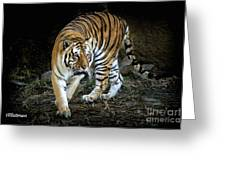 Tiger Stripes Memphis Zoo Greeting Card