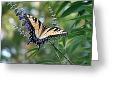Tiger Swallowtail 1 Greeting Card
