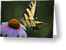 Tiger Swallowtail 1 Greeting Card