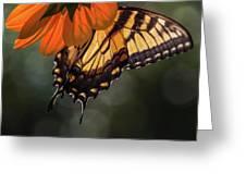 Tiger Swallowtail - 2 Greeting Card