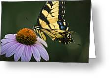 Tiger Swallowtail 2 Greeting Card