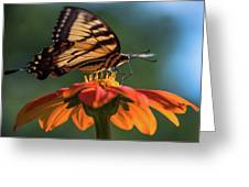 Tiger Swallowtail - 3 Greeting Card