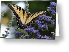 Tiger Swallowtail 3 Greeting Card