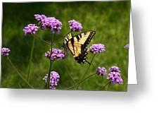 Tiger Swallowtail Among The Verbena   Greeting Card