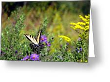 Tiger Swallowtail And Bee Greeting Card