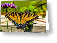 Tiger Swallowtail Butterfly By Fence Greeting Card