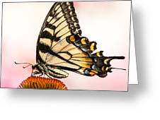 Tiger Swallowtail On Coneflower Greeting Card