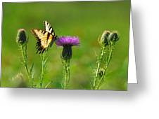 Tiger Swallowtail On Thistle Greeting Card