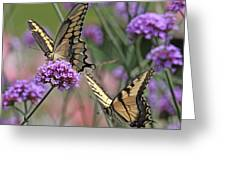 Tiger Swallowtails Greeting Card