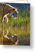 Tiger Tiger Burning Bright Greeting Card by Melody Watson