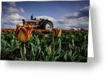 Tiger Tulip Greeting Card