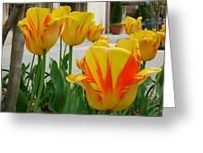Tiger Tulips Greeting Card