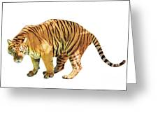 Tiger White Background Greeting Card