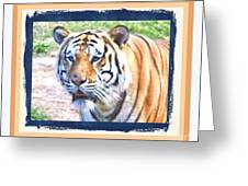 Tiger With Border Greeting Card