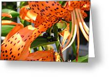 Tigerlilies Greeting Card