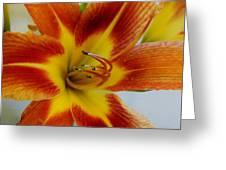 Tigerlily Paw Greeting Card