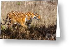 Tigers Burning Bright Greeting Card