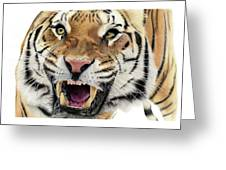 Tigers Pace Greeting Card