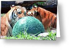Tigers Playing Greeting Card
