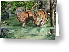 Tiger's Water Park Greeting Card