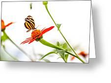 tigerwing at plus 1EV Greeting Card