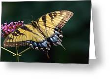 Tigress And Verbena Greeting Card