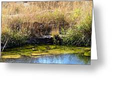 Tigress By The Stream Greeting Card