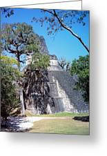 Tikal Iv Greeting Card