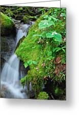 Tillium By Baxer Creek Greeting Card