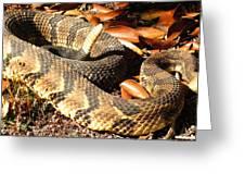 Timber Rattlesnake Horizontal Greeting Card