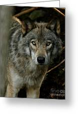199d77b22bba Timber Wolf Photograph by Heather King