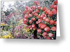Timberland Greeting Card